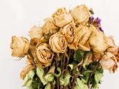 susene_kvetiny